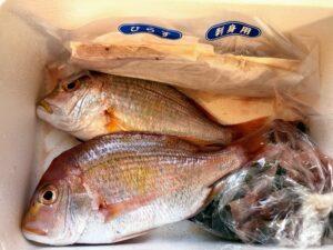 鯛、ひらす、いさき、魚のあら