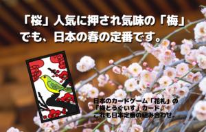 「桜」人気に押され気味の「梅」でも、日本の春の定番です。