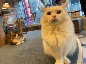 猫カフェ MOCHA 原宿竹下通り店