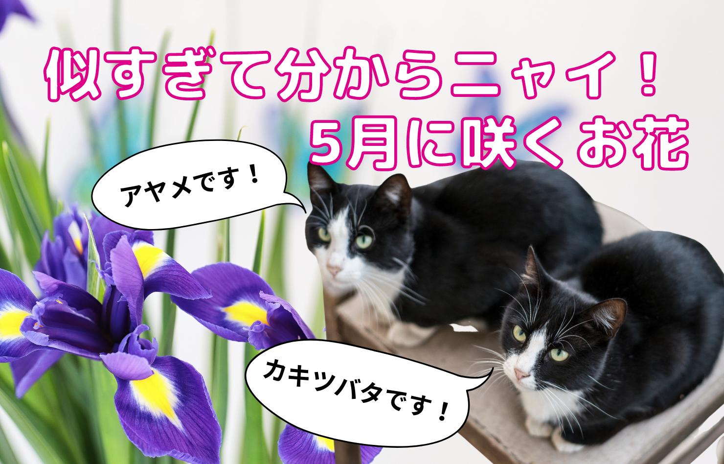 似すぎて分からニャイ!5月に咲くお花