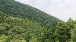お部屋はとてもきれいで、こちら側の風景もきれいな山で癒やされます。